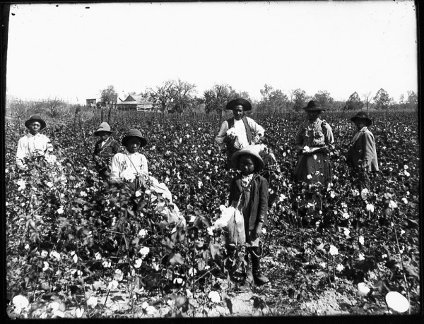 slaves-in-field-600x459